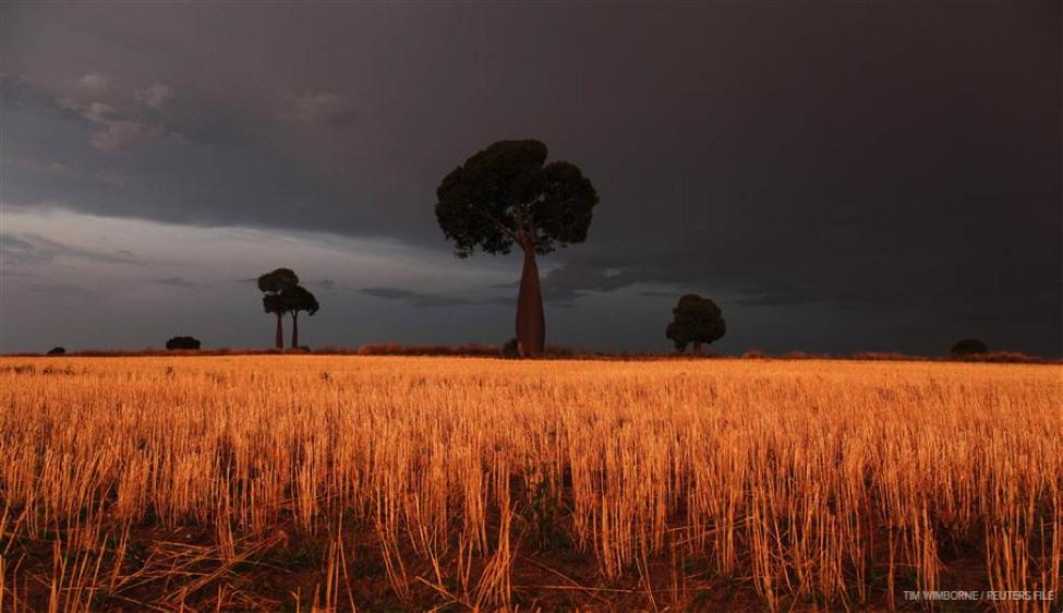 Big Data для сельского хозяйства